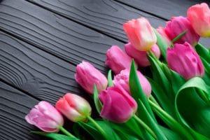 La Crise des Tulipes