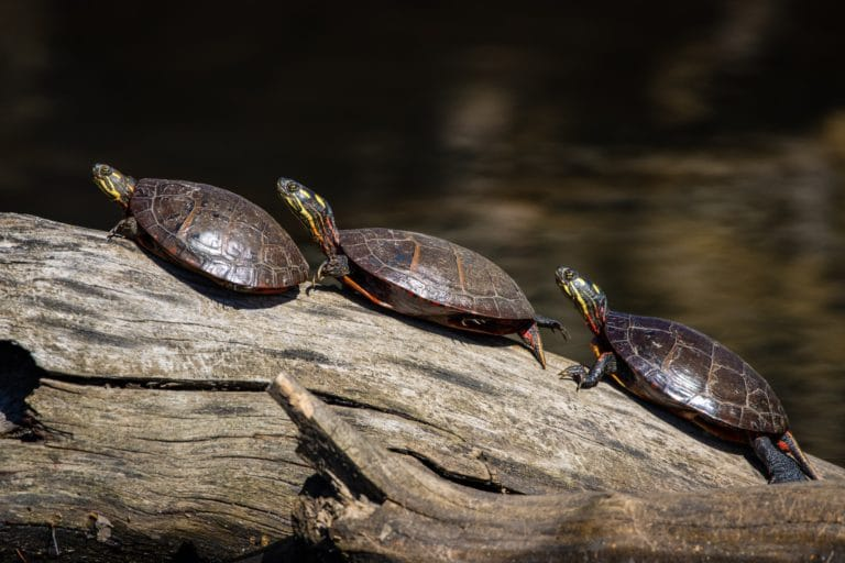 Méthode des tortues